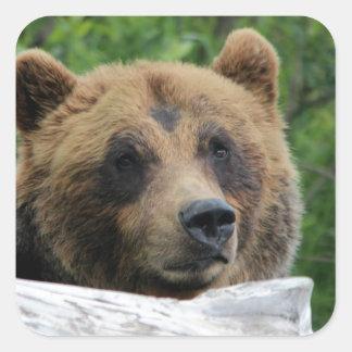 Urso de urso do Alasca, o Kodiak Adesivo Quadrado