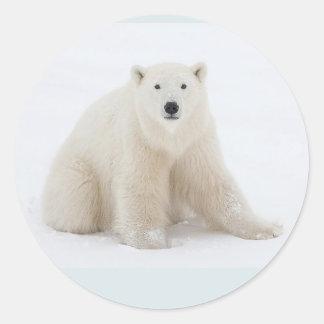 Urso polar adesivo redondo