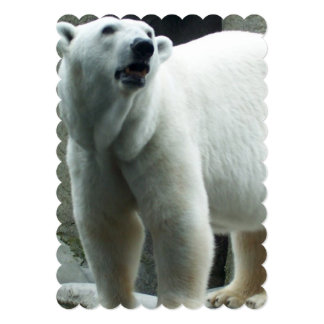 Urso polar branco convite 12.7 x 17.78cm