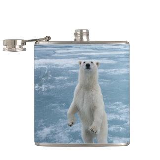 Urso polar cantil