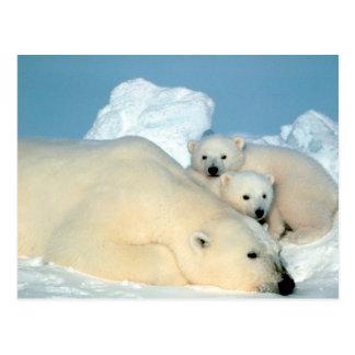 urso polar com cartão dos filhotes