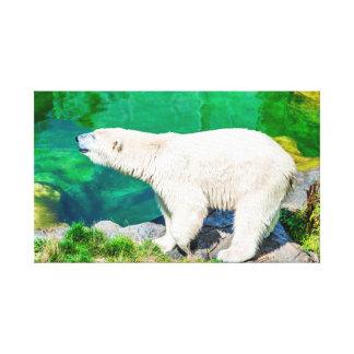 Urso polar das canvas