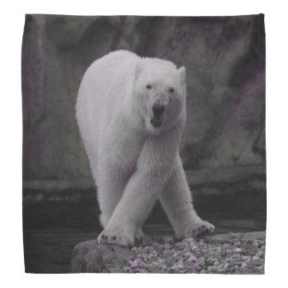urso polar de dança bandanas