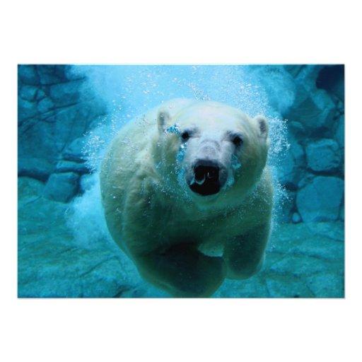 Urso polar na água convite
