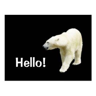 Urso polar no preto olá! cartão postal