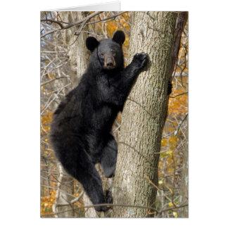 Urso preto americano que escala uma árvore cartão comemorativo