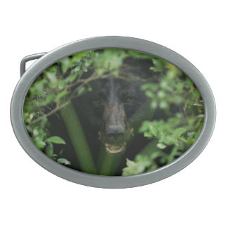 Urso preto - coleção americana do mamífero