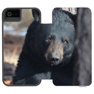 Urso preto selvagem bonito
