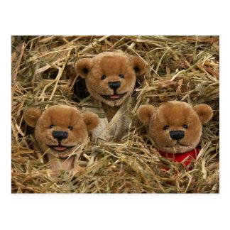 Ursos Dinky: Miúdos do fazendeiro Cartão Postal