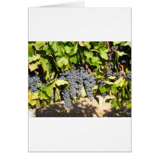 Uvas de Napa Cartão Comemorativo