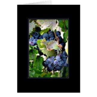 Uvas do cartão de Napa
