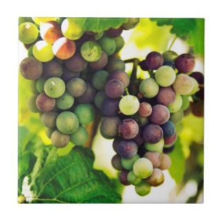 Uvas maravilhosas da videira, natureza, queda Sun