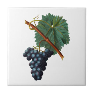 Uvas roxas com o azulejo de Redoute da folha