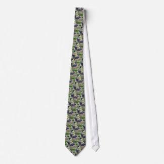 Uvas vermelhas na videira com folhas verdes gravata