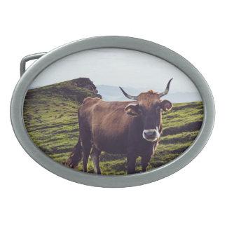 Vaca bovina na paisagem bonita