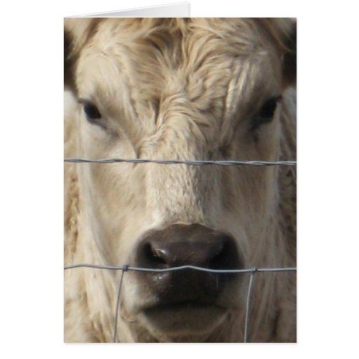 Vaca branca - mudança de endereço ocidental cartao