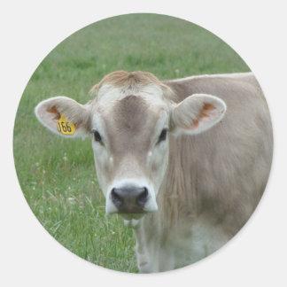 vaca doce do jérsei adesivo redondo