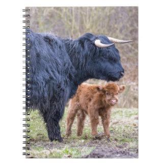 Vaca escocesa preta da mãe do escocês com cadernos espiral