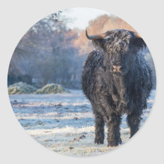 Vaca escocesa preta do escocês na paisagem do adesivo redondo