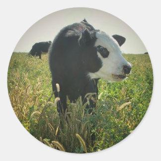 Vaca na etiqueta do pasto adesivo em formato redondo