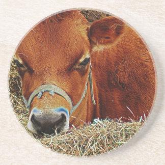 Vaca Nestled Porta Copos De Arenito