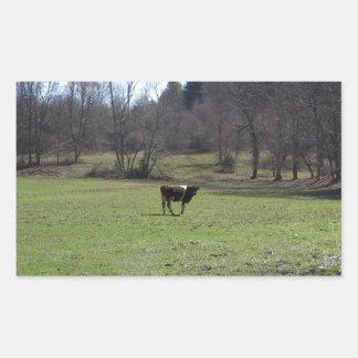 Vaca só adesivo retangular