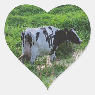 Vaca Straggled Adesivo Em Forma De Coração