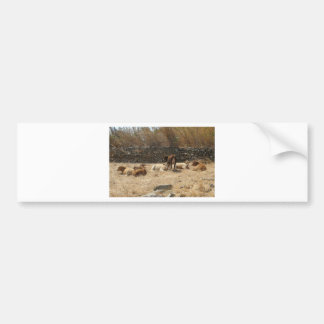 Vacas Adesivo Para Carro