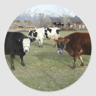 vacas amigáveis adesivo redondo