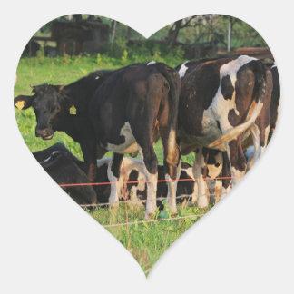 Vacas Adesivo Em Forma De Coração