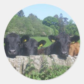 vacas adesivo redondo