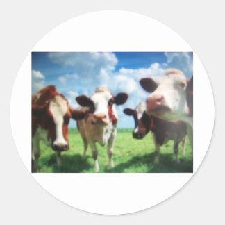 vacas adesivos em formato redondos