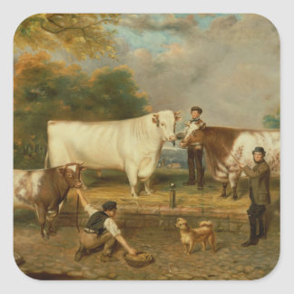 Vacas com um pastor adesivo quadrado