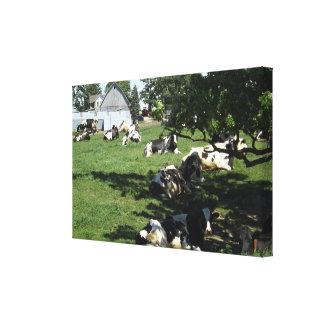 Vacas de descanso na arte das canvas da fazenda