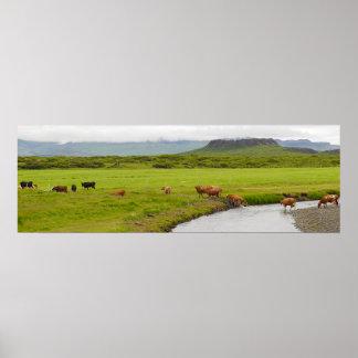 Vacas e poster de Islândia da cratera de Eldborg