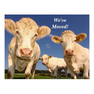 Vacas nós movemos o cartão novo do endereço
