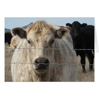 Vacas pretas & brancas - mudança de endereço cartão de nota