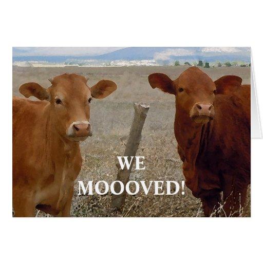 Vacas vermelhas - mudança de endereço ocidental cartao