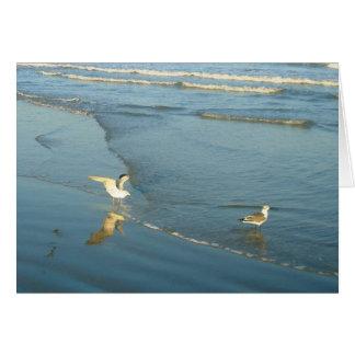 Vadeando cartões de nota vazios das gaivota