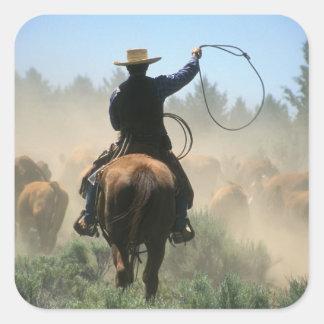 Vaqueiro no cavalo com o laço que conduz o gado adesivo quadrado