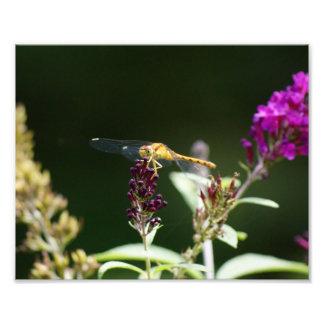 Vara da libélula impressão 10 x 8 fotográfico foto artes