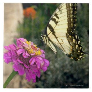 Varas amarelas da borboleta do swallowtail em um z azulejos