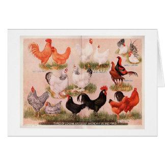 Variedade de galinhas cartao
