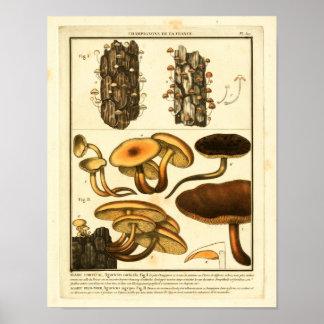 Variedades do vintage de impressão francês da arte