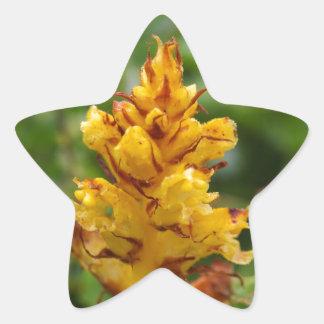 Vassoura do Butterbur (flava de Orobanche) Adesivo Estrela