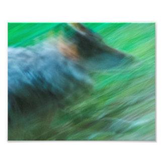 """Velocidade 10"""" do lobo x 8"""", papel da foto de"""