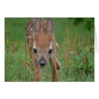 Vem aqui o cartão de Bambi