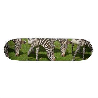 Vendo zebras dobro skateboard