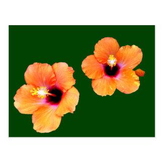 Verde alaranjado BG do hibiscus os presentes de Cartoes Postais