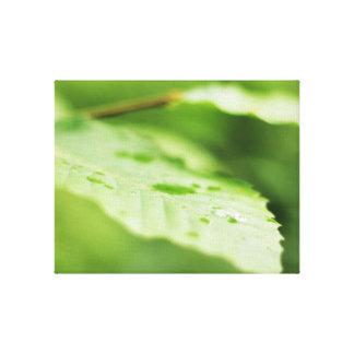 Verde bonito do impressão da foto da gota da chuva